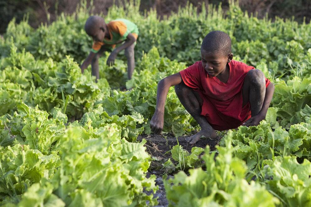 Lapsia puutarhassa Bolin kaupungissa Tšadissa. © UNICEF